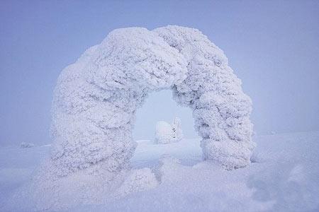 جنگل یخ زده,جنگل یخ زده در فنلاند,تصاویر جنگل یخ زده
