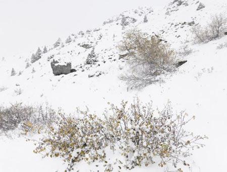 رشته کوه آلپ,کوههای آلپ,عجایب گردشگری
