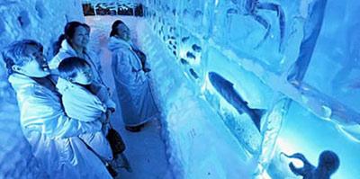 آکواریوم یخی,آکواریوم,آکواریوم یخی در ژاپن