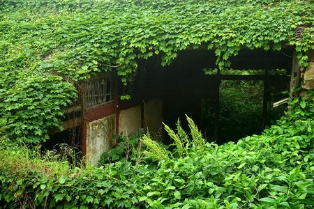 روستا, جزیره Gouqi,عجایب طبیعت