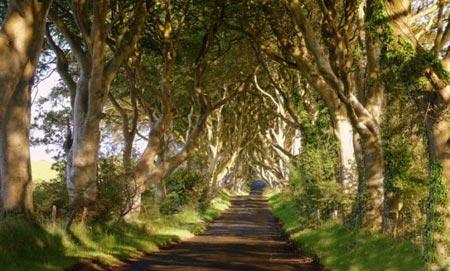 تونل درختی,مکانهای دیدنی ایرلند,تونلی از جنس درخت در ایرلند