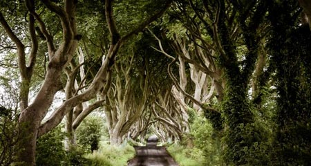 تونل درختی,عکس های تونل درختی,مکانهای دیدنی ایرلند