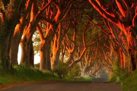 تصاویر تونل درختی,تونلی از جنس درخت در ایرلند,مکانهای دیدنی ایرلند