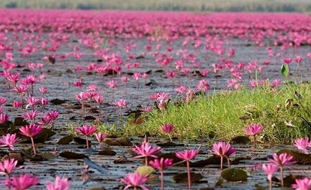 جاهای دیدنی تایلند,دیدنی های تایلند