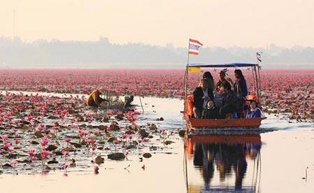 دریاچه نیلوفر قرمز,دریاچه نیلوفر قرمز در تایلند