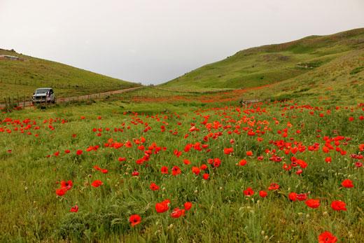 راهنمای کامل سفر به سوباتان، ییلاقِ بی نظیر گیلان