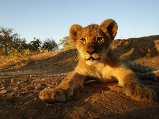 15 مکان حیرتانگیز برای دیدن حیوانات آفریقا
