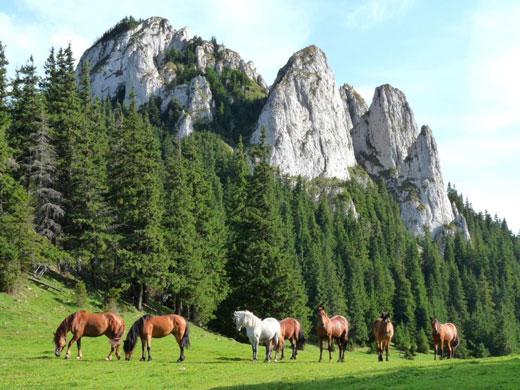 سرزمین افسانه ای دراکولا با چشم اندازهای فوق العاده زیبا+تصاویر