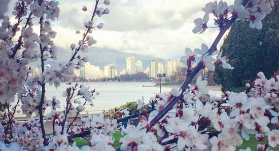 بهترین نقاط برای تماشای شکوفه های گیلاس (+عکس)
