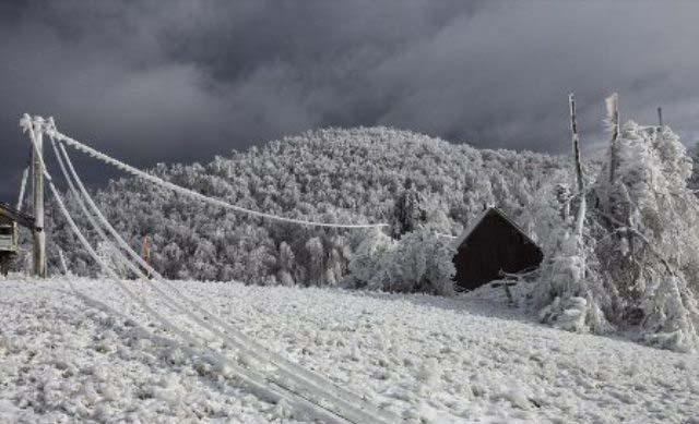 اگر به این جنگل بروید یخ میزنید!!+تصاویر جالب