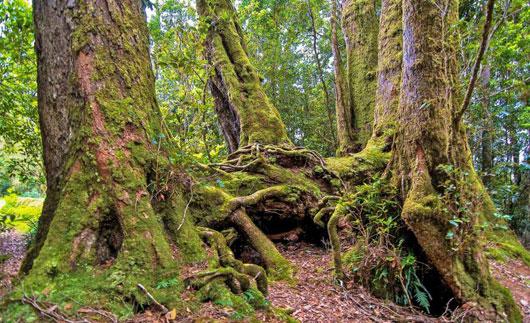 با این عکس ها به عمق جنگل سوادکوه سفر کنید