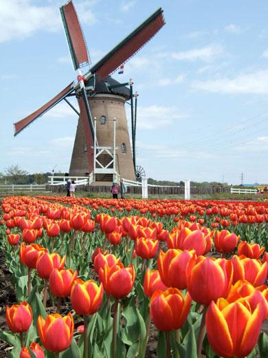 با هلند، کشور گل و آسیاب بادی بیشتر آشنا شوید