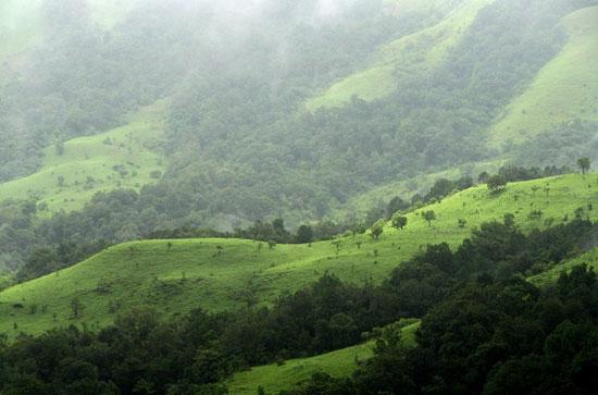 دیدنی ترین جنگل های مه آلود جهان + عکس