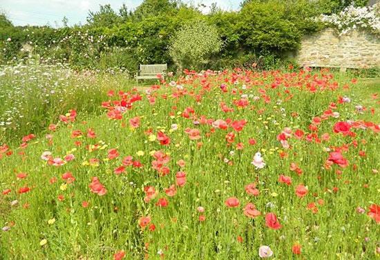 زیبا ترین و دیدنی ترین باغ های بریتانیا