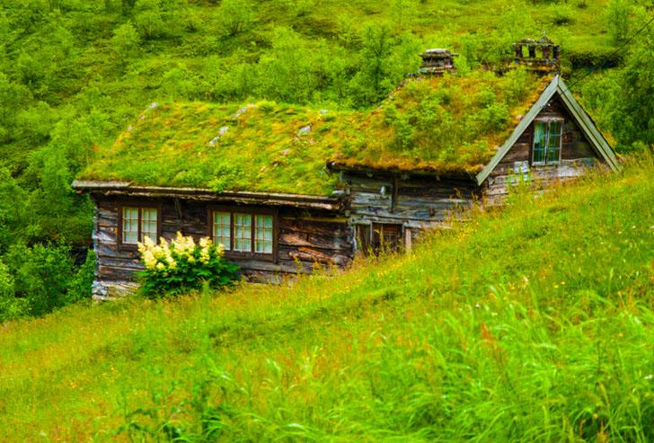 مسابقه بام های سبز در شمال اروپا به روایت تصویر